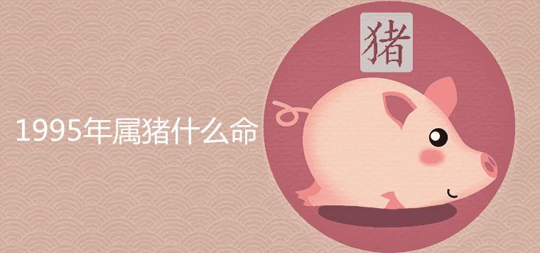 995年属猪什么命
