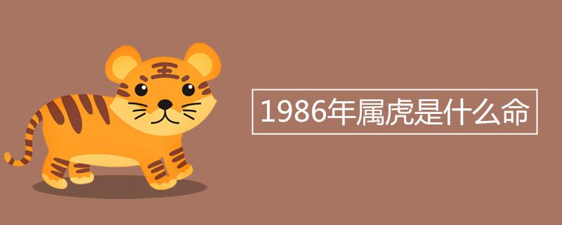 """986年属虎是什么命"""""""