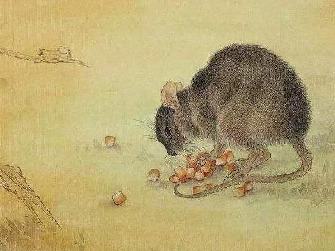1984年出生的属鼠的人运势