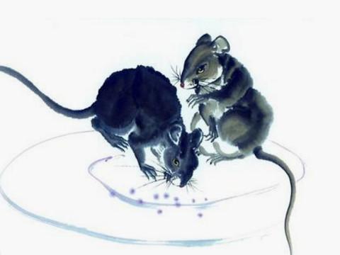 1960年出生的属鼠的人运势