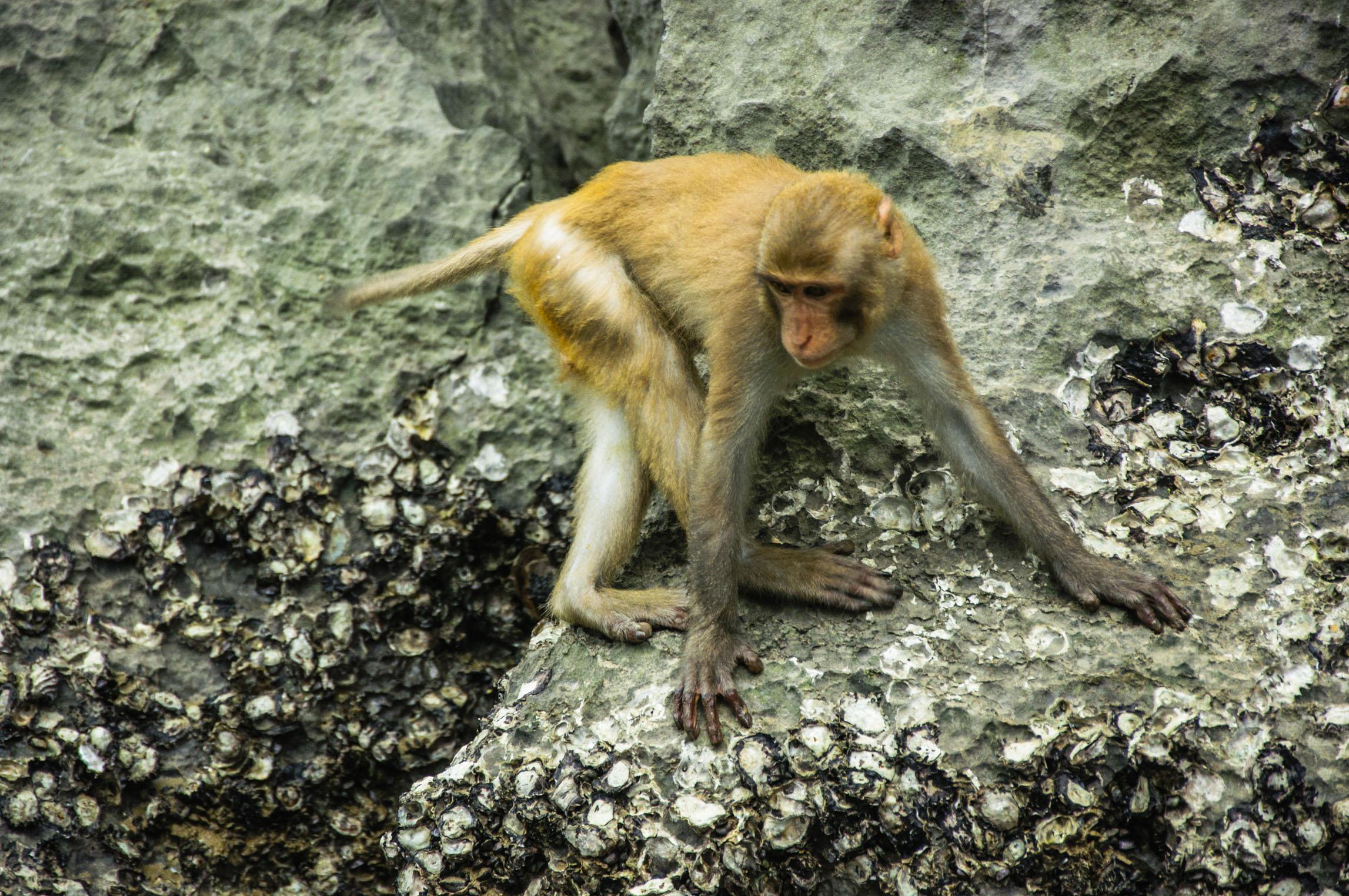 属马和属猴的婚姻如何 男属马女属猴婚姻状况