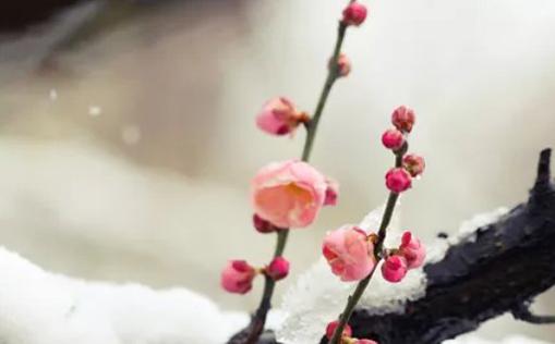 2021年3月5日农历正月二十二出生的男孩起好听儒雅的名字